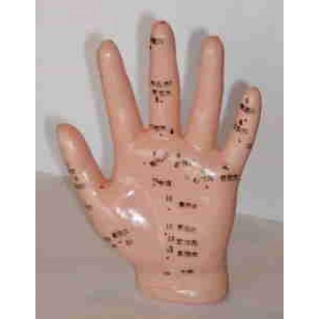 Modelo anatómico - Mão